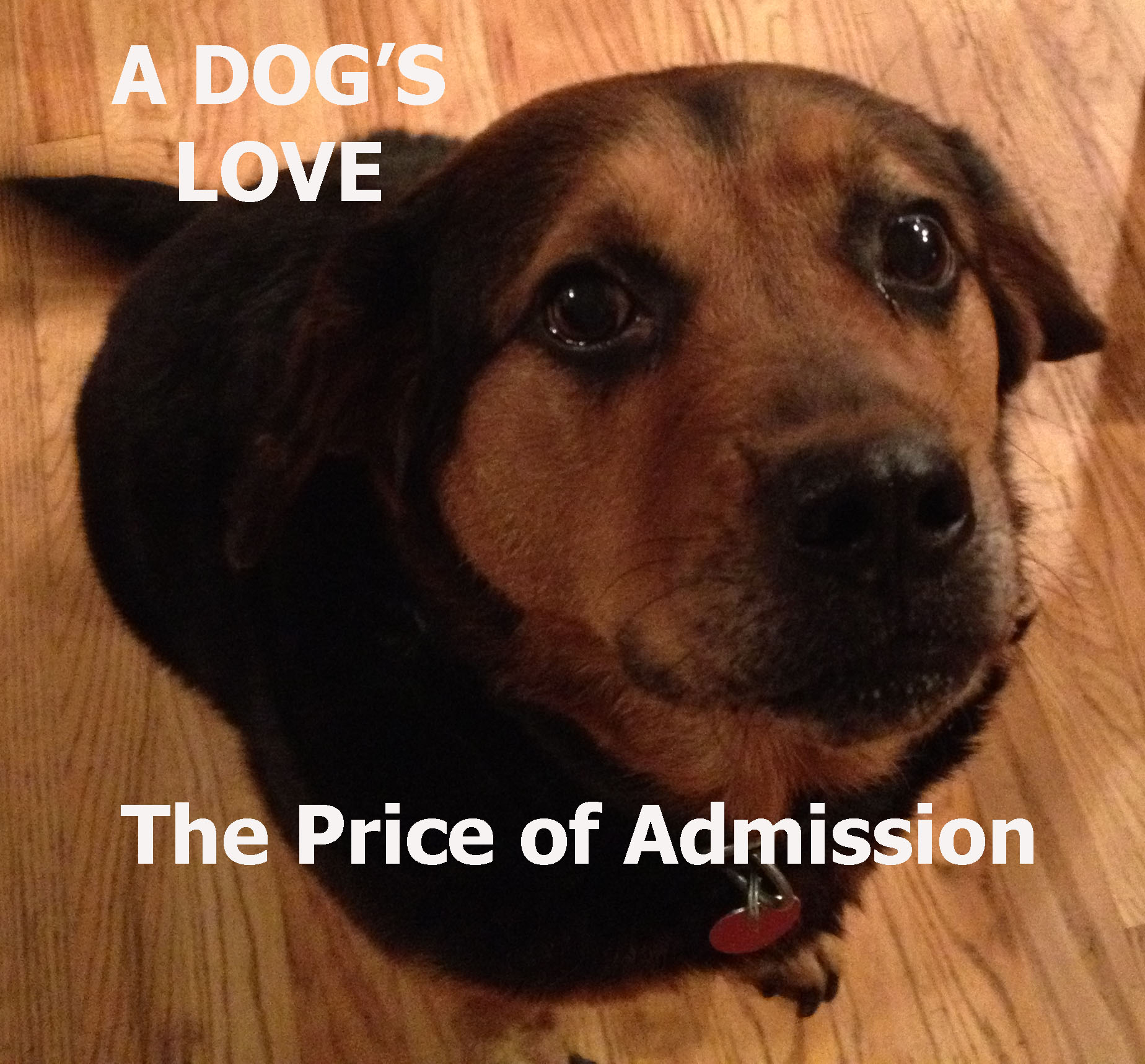 A Dog's Love – The Price of Admission