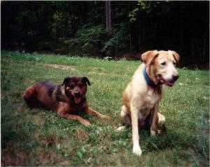 Rescue dog Mazel and my dog Princess 1998